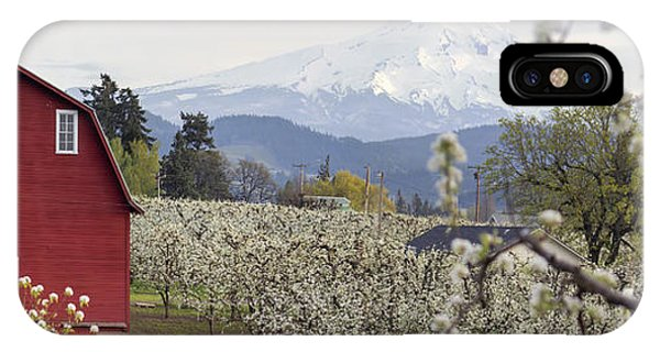 Pear Tree Orchard In Hood River Oregon IPhone Case