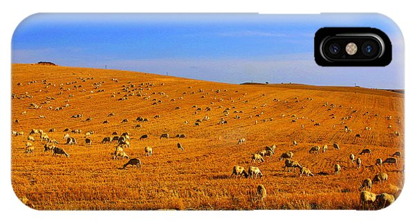 Sheep Grazing IPhone Case