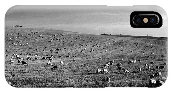 Sheep Grazing In The Countryside Tarquinian IPhone Case