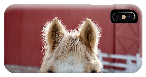 Horse iPhone Case - Peek A Boo by Courtney Webster