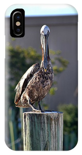 Pelican At Boat Dock IPhone Case