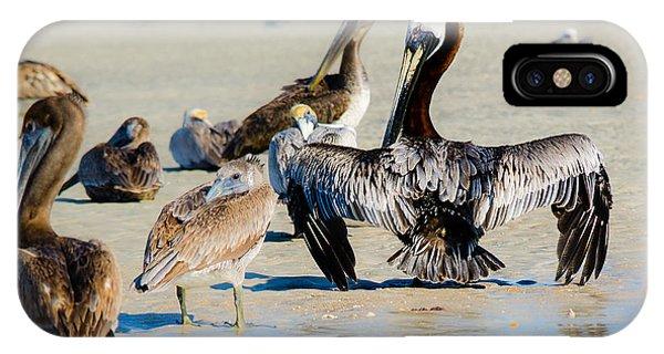 Pelican Drying IPhone Case