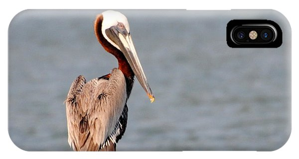 Pelican Eyes The Photographer IPhone Case