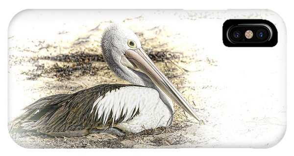 iPhone Case - Pelican by Holly Kempe