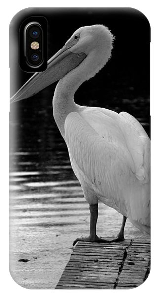 Pelican In The Dark IPhone Case