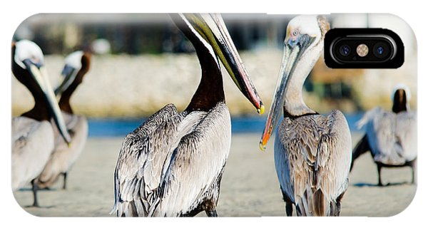 Pelican Looking At You IPhone Case