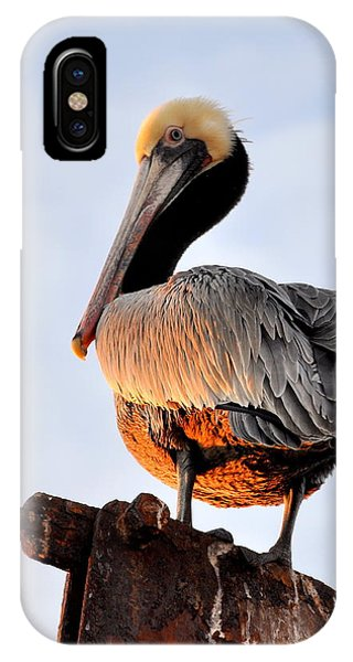 Pelican Looking Back IPhone Case