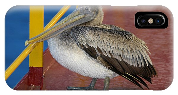 Pelican On A Ship Deck IPhone Case
