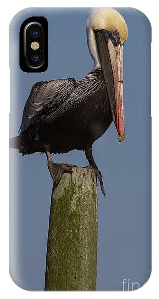Pelican On Post IIi IPhone Case