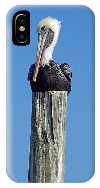 Pelican On Post IPhone Case