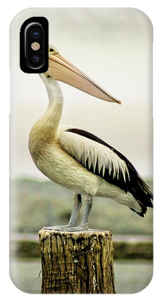 iPhone Case - Pelican Poise by Holly Kempe