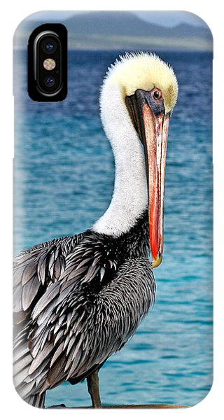 Pelican Portrait IPhone Case