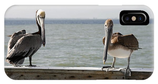 Pelicans On The Pier At Fort Myers Beach In Florida IPhone Case