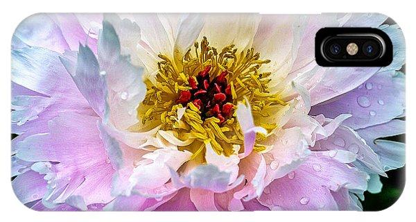 Edward iPhone Case - Peony Flower by Edward Fielding