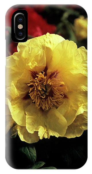 Golden Gardens iPhone Case - Peony (paeonia 'golden Isle') by Ian Gowland/science Photo Library
