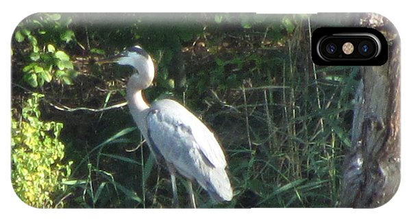 Perched Blue Heron Pondering Phone Case by Debbie Nester