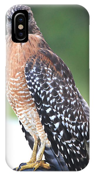 Perched On A Park Bench IPhone Case