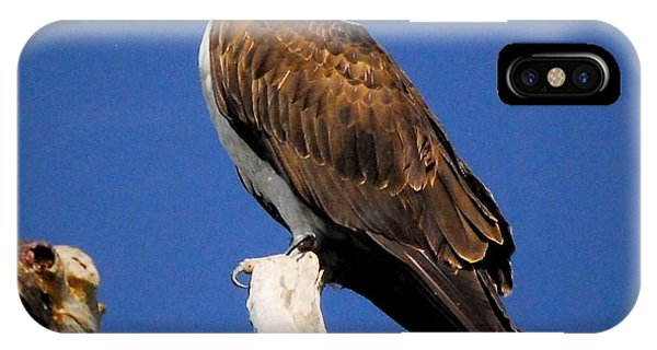 Ospreys iPhone Case - Perched by Quinn Sedam