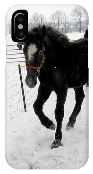 Percheron Horse Colt In Snow IPhone Case