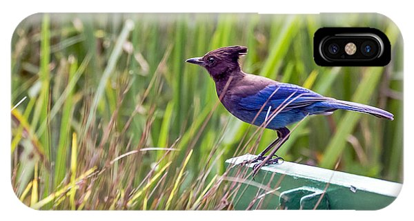 IPhone Case featuring the photograph Perching Jay by Kate Brown