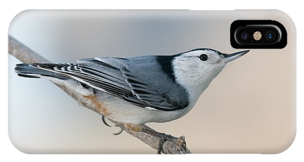 Perching Nuthatch IPhone Case