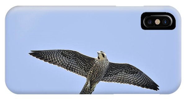 Peregrine Falcon In Flight IPhone Case