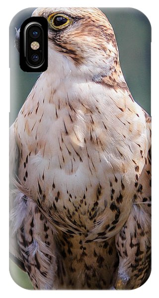 Peregrine Falcon Phone Case by Marie  Cardona