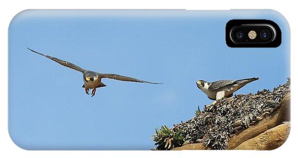 Peregrine Falcons - 1 IPhone Case