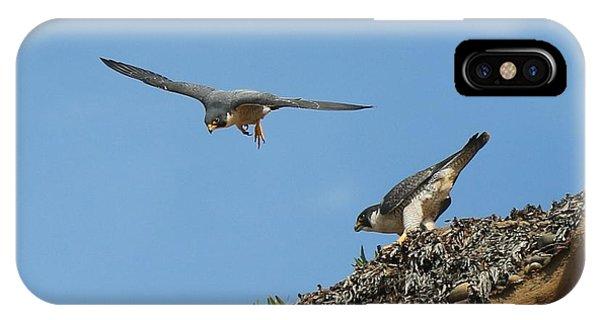 Peregrine Falcons - 6  IPhone Case