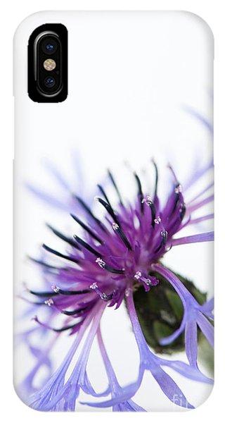 Perennial Cornflower IPhone Case
