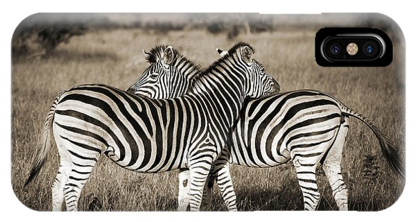 Zebra iPhone Case - Perfect Zebras by Delphimages Photo Creations