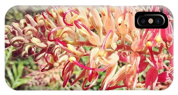 Decorative iPhone Case - Australian Grevillea Flower by Sinead Connell