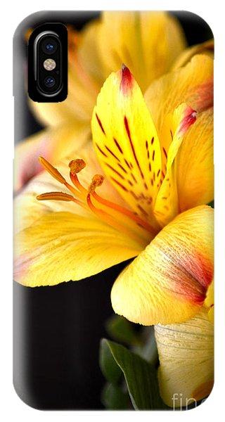 Peruvian Lily IPhone Case