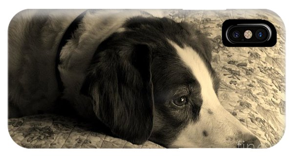 Pet Portrait-waiting For Mom IPhone Case