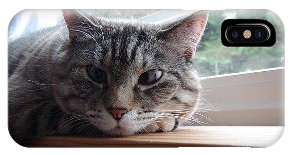 Pet Portrait - Lily The Cat IPhone Case