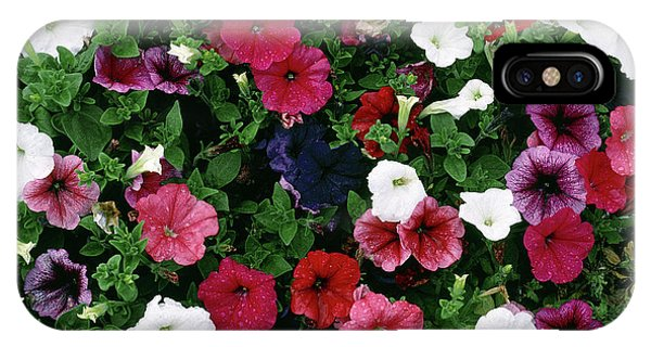 Hybrid iPhone Case - Petunia F2 Hybrids Mixed by Maurice Nimmo/science Photo Library