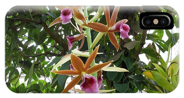 Phaius Orchids IPhone Case