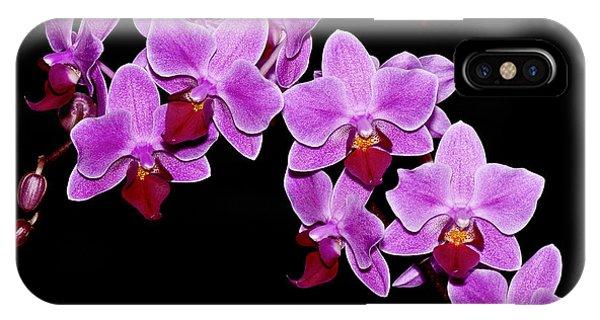 Phalaenopsis IPhone Case