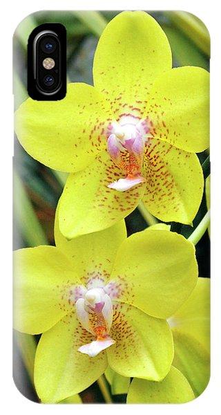 Golden Gardens iPhone Case - Phalaenopsis 'golden Treasure' by Neil Joy/science Photo Library