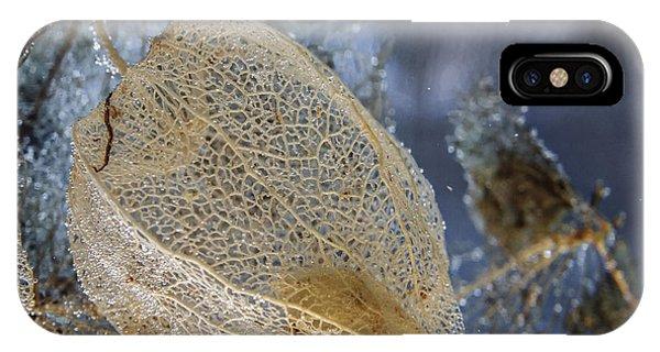 Physalis Skeleton Single Phone Case by Thomas Olbrich