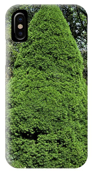 Spruce iPhone Case - Picea Glauca Var. Albertiana 'conica' by Neil Joy/science Photo Library