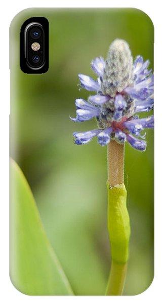 Pickerelweed IPhone Case