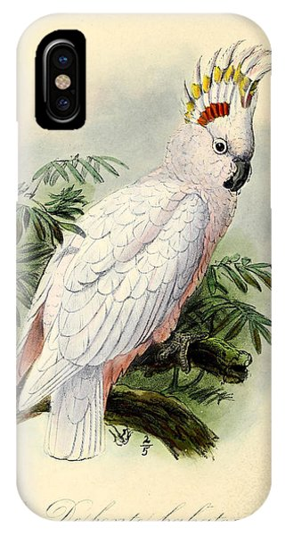 Cockatoo iPhone Case - Pied Cockatoo by Dreyer Wildlife Print Collections
