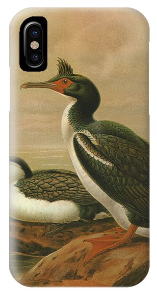 Chatham iPhone Case - Pied Shag And Chatham Island Shag by Dreyer Wildlife Print Collections