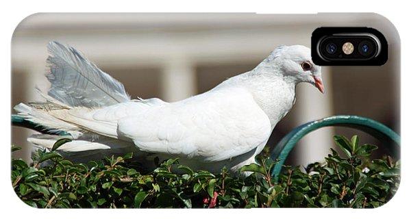Pigeon Phone Case by Dave Dos Santos