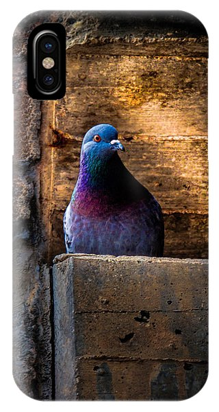 IPhone Case featuring the photograph Pigeon Of The City by Bob Orsillo