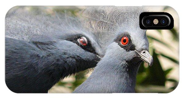 Pigeons IPhone Case