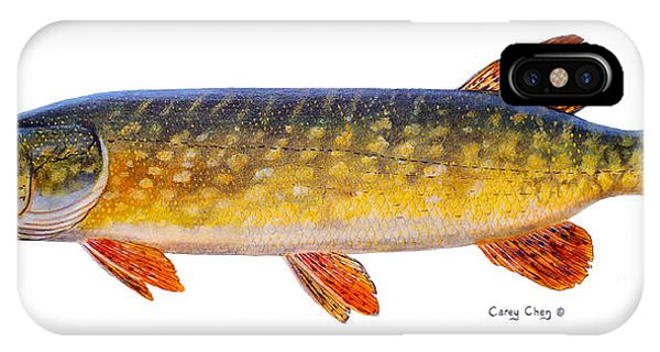 Catfish iPhone Case - Pike by Carey Chen