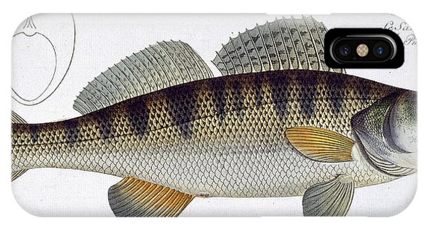 Ichthyology iPhone Case - Pike Perch by Andreas Ludwig Kruger
