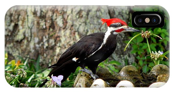 Pileated Woodpecker Phone Case by Lynn Griffin